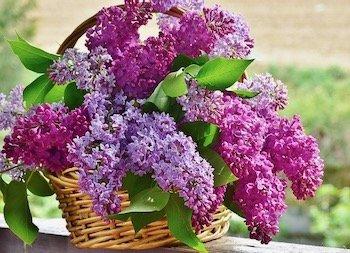 Lilacs Self-Care