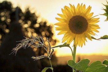 Summer Sun Eczema
